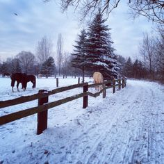 Winter, snow and horses :)