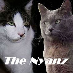 Check out The Nyanz on ReverbNation