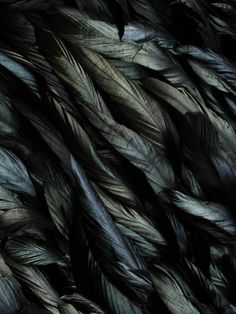 #Black #feathers, art piece detail from British artist Susie Mac Murray.