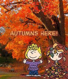 💛I love Snoopy Peanuts Cartoon, Peanuts Snoopy, Snoopy Love, Snoopy And Woodstock, Good Morning Snoopy, Muñeca Diy, Late Summer Flowers, Charlie Brown And Snoopy, Fall Harvest