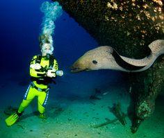 scuba diving | scuba diving trip, dive trips