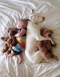 A few tips on how to introduce your dog to new baby...This is an exciting time for everyone in the family – the dog included – and you want to make sure.. #dog #pets