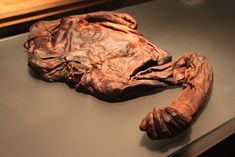 2300 yr old mummified Bog body of Old Croghan Man, with leather and Celtic metal binding.National Museum of Ireland.