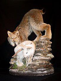 Lynx Mount