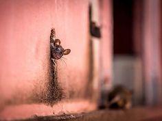 Les PLUS BELLES PHOTOS 2015 du National Geographic - Confidentielles