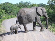 Elephants - Kenya and Tanzania trip 2007 - photo taken by Ginny Toll