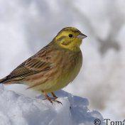 ŽIVOT V ZIMNÍ PŘÍRODĚ :: Béčko-Tc Bird, Animals, Animales, Animaux, Birds, Animal, Animais