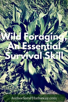 Wild Foraging is an essential #survival skill! Learn why and how to get started.