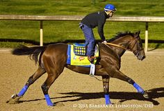 AMERICAN PHAROAH, George Alvarez up, galloping early this a.m. at Churchill Downs. #KentuckyDerby2015 #lovethattail
