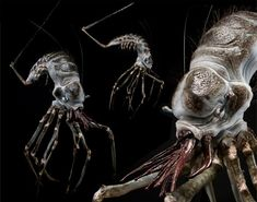 The Art of District Weta Workshop Creature 3d, Creature Picture, Creature Concept, Creature Design, Alien Concept Art, Concept Art World, Alien Design, Tyranids, Pretty Drawings
