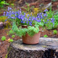 How To Make A Tree Stump Planter: Steps, Tools - Bombay Outdoors Container Plants, Container Gardening, Gardening Tips, Tree Stump Planter, Garden Care, Shade Garden, Outdoor Ideas, Outdoor Spaces, Outdoor Living