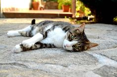 J.Fox, hypnotic gaze.  #kitty #cat #gato #pet