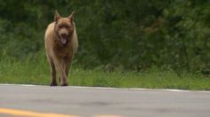 For 12 years, a dog named Bruno has strolled into town each day just to say hi…