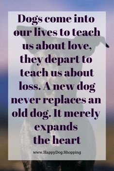 ❤️ Dog Quotes Love and Loyalty – HappyDog.Shopping ❤️ Dog Quotes Love and Loyalty – HappyDog. Best Dog Quotes, Dog Quotes Love, Dog Sayings, Happy Dog Meme, Happy Dogs, Yorkies, I Love Dogs, Puppy Love, Dog Died