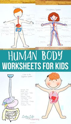 Try these cool human body worksheets for kids. These science worksheets will introduce the human body organs and their functions to your kids in an engaging and fun way. Human body activities for each of the human body systems that your kids can enjoy. Kindergarten Science Experiments, Science Activities For Kids, Science Worksheets, Worksheets For Kids, Health Activities, Science Fun, Elementary Science, Teaching Kindergarten, Kindergarten Worksheets