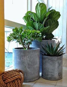 Indoor green plants pictures and inspirational deco ideas - Diy Garden Projects