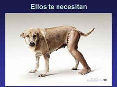 Tienen derechos #animales