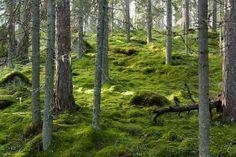 PYHÄHÄKKI NATIONAL PARK, SAARIJÄRVI, FINLAND