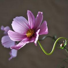 Flower, Plant, Flowering, Krásenka