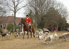 foxhunting, LeVeen Photography, horses and hounds, Camden SC,
