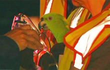 "Parrots in burning house call ""help"" and ""fire"".  Oxygen is given to one of the rescued parrots after a fire in Boise, Idaho"