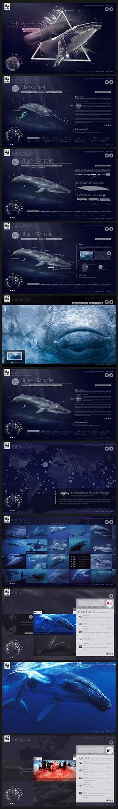 WWF - The Whale | #webdesign #it #web #design #layout #userinterface #website #webdesign