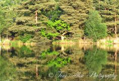 Trees reflected on the Elstead Moat. High quality prints available in a variety of sizes. Create lovely wall art for your home or office. Tree Lighting, Abstract Photography, Reflection, Country Roads, Trees, Wall Art, Create, Natural, Prints