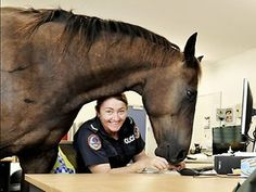 """Australian police officer Senior Constable Kelly Walters gets some office help from Trombone the police horse. """"There are studies that show one horse is worth 20 people on the ground in difficult situations."""""""
