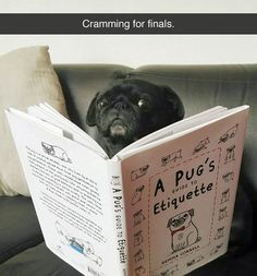 Cramming for finals.