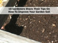 10 Gardeners Share Their Tips On How To Improve Your Garden Soil