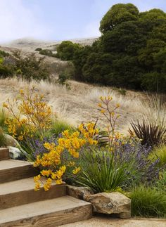Rain and snow are going to play a huge part in your yard landscaping decisions. For example you will have to plan for your yard landscaping with care. Landscaping Supplies, Landscaping Tips, Landscaping Software, Landscaping Contractors, Luxury Landscaping, Tropical Landscaping, Landscaping Company, Hillside Landscaping, Front Yard Landscaping