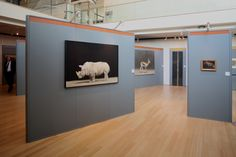 Trento, at MUSE_Museum, Renzo Piano's museum. Setting up project by arch. Michele Piva, Milan. Big Animal portraiture section.