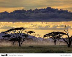Serengeti, Tanzanya, Afrika