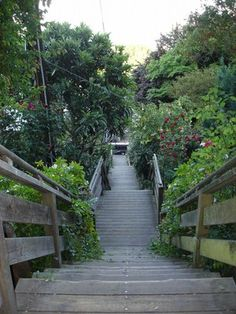 Filbert Steps - over 400 steps of torture when you aren't really expecting to do them, but your reward is an amazing view! Take these to get to Coit Tower, and you try and find the Parrots of Telegraph Hill that live here...Filbert & Sansome