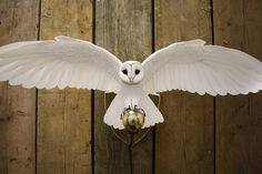 How amazing is this? So beautiful!! Hand made barn owl wall light by ZackMclaughlin on Etsy, £950.00