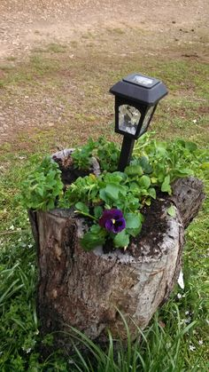 Turn an old tree stump into a planter :)