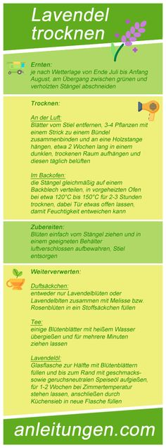 Lavendel trocknen – In dieser Infografik wird dir erklärt, wie man Lavendel auf… Drying Lavender – This infographic explains how to dry Lavender in different ways. It also explains how you can process the dried flowers. Potted Plants Patio, Water Plants, Indoor Plants, Pot Plants, House Plants, Growing Lavender, Outdoor Post Lights, Medicinal Herbs, Herb Garden