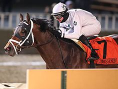 WinStar Farm's Commissioner went out on a high note Nov. 28, ending his career with a victory in the $250,000 Hawthorne Gold Cup Handicap (gr. II) at Hawthorne Race Course.