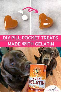 Not only do DIY gelatin dog treats make great pill pockets, but they also support brain function, perfect for my epileptic dog! This no-bake easy homemade dog treat recipe is for the basic pumpkin gelatin treats I've made many times! I started experimenting with other dog safe ingredients like bone broth, spinach and banana. You can mix gelatin with almost anything to create a healthy homemade treat your dog can't resist! Homemade Dog Treats, Healthy Dog Treats, Dog Treat Recipes, Dog Food Recipes, Pill Pockets, Great Lakes Gelatin, Pocket Dog, Beef Gelatin, Frozen Dog
