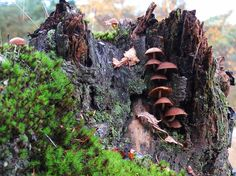 Hilversum, The Netherlands. Mushroom stairs.