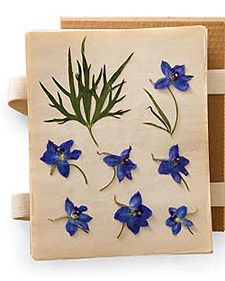 Bookmarks, cards, gift tags, wall art, coasters on tables, so many uses to bring in pressed flowers from your garden season.