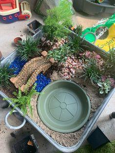 Kids Fairy Garden, Fairy Garden Plants, Garden Terrarium, Fairy Garden Houses, Fairy Gardens, Dinosaur Garden, Sensory Garden, Toddler Classroom, Miniature Gardens
