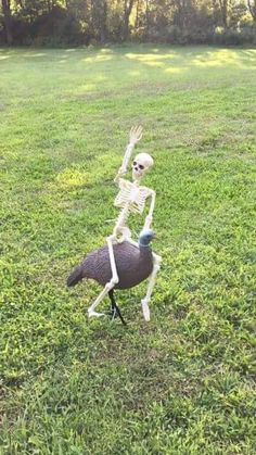 Funny Skeleton, Skeleton Pics, Outdoor Halloween, Halloween Fun, Spooky Scary, Creepy, Reaction Pictures, Funny Pictures, Haha Funny