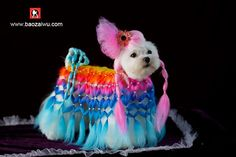 Crystals Creative grooming-a Maltese with braids and hair colors! From Jimmy Chen Weiman on Facebook. This must be the Lady Gaga of the canine grooming set.