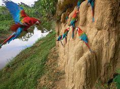 manu-macaws_95289_990x742.jpg