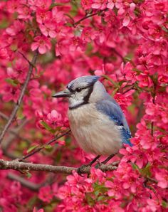 Blue Jay #photos, #bestofpinterest, #greatshots, https://facebook.com/apps/application.php?id=106186096099420 – #cop21 #globalwarming #climatechange More at http://www.GlobeTransformer.org