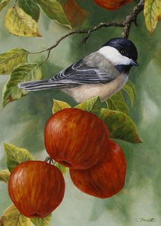 Apples and chickadee - bird painting by Crista Forest