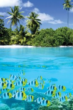 Snorkeling,  Caribbean living.  Island life