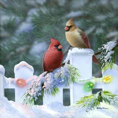 """Christmas Cardinals"" by Bradley Jackson"
