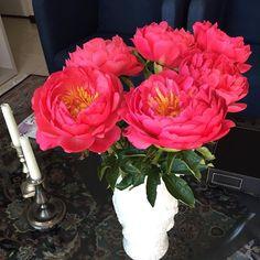 Minhas peônias! Sã e salvas depois de 10 horas de viagem, da #holanda até #italia #peonia #flores #dutchflowers #nederland #composizionefloreale